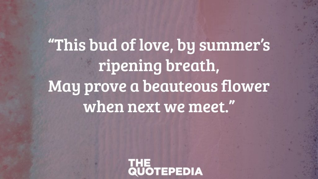 """This bud of love, by summer's ripening breath, May prove a beauteous flower when next we meet."""