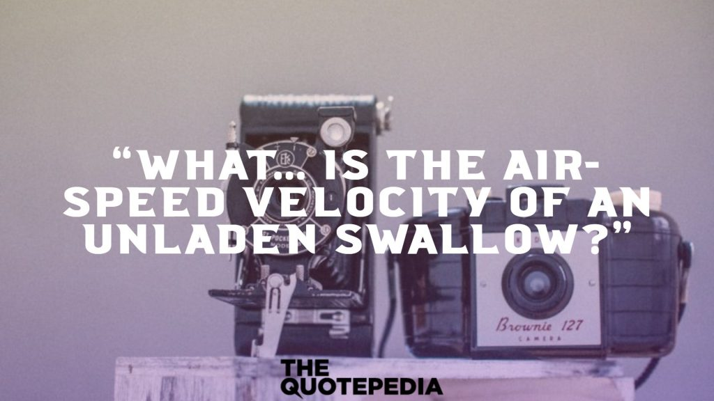 """""""What... is the air-speed velocity of an unladen swallow?"""""""