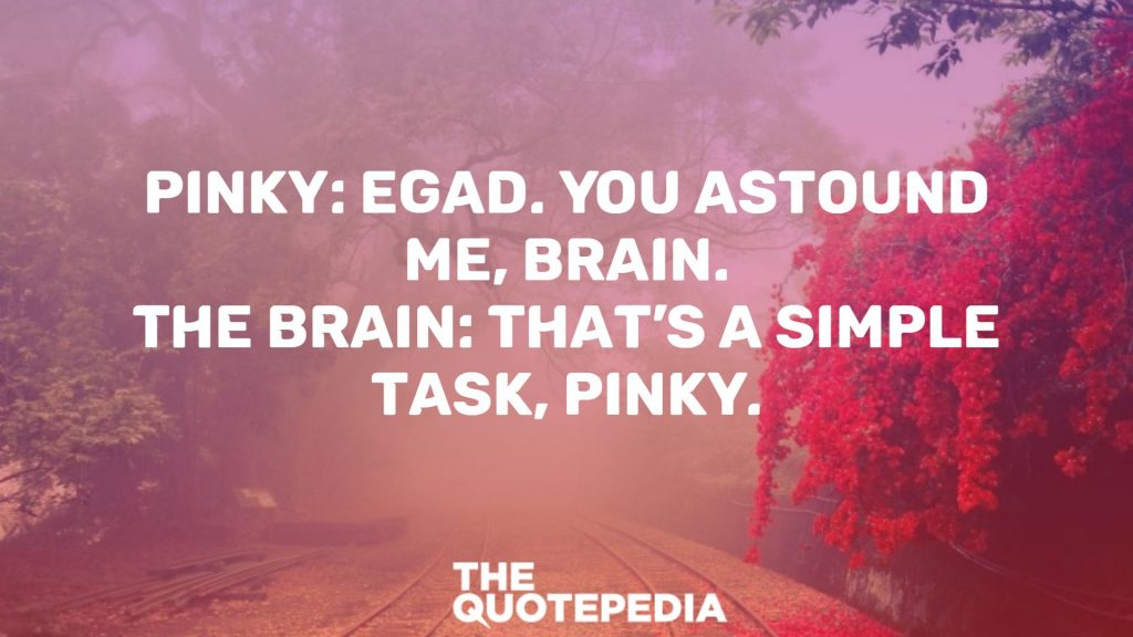 "Pinky: Egad. You astound me, Brain. The Brain: That's a simple task, Pinky.  ""Brain: 'Are you pondering what I'm pondering?' Pinky: 'I think so, Brain. But me and Pippi Longstocking… I mean, what would the children look like?'""  ""Pinky: 'Egad. You astound me, Brain.' Brain: 'That's a simple task, Pinky.'""  ""The Brain: 'Pinky, are you pondering what I'm pondering?' Pinky: 'I think so, Brain. But how will we get the Spice Girls into the paella?'""  ""Brain: 'Pinky, are you pondering what I'm pondering?' Pinky: 'I think so Brain… but do I really need 2 tongues?'""  ""Pinky: 'Russia! I've heard of that place! Isn't it full of cheating, lying and backstabbing intrigue?' Brain: 'The Cold War is over Pinky. Now Russia is a place of free-market capitalism.' "" Pinky: 'What's free-market capitalism?' Brain: 'Erm… cheating, lying and backstabbing intrigue.'""  ""Pinky: 'Egad Brain! I wish I was as smart as you.' Brain: 'I wish you were as smart as a tree stump, Pinky.'""  ""Brain: 'I met her today in the maze. Her name is Billie. She's of simple folk, fair and true.' Pinky: 'You mean she's stupid?'""  ""Brain: 'How are going to get the Earth to lose weight?' Pinky: 'I know! We can get everyone to go on a diet!' Brain: 'Diets don't work.' Pinky: 'Not even if you call them 'A Whole New Way of Eating?"" Brain: 'No.'""  ""Brain: 'Pinky, are you pondering what I'm pondering?' Pinky: 'I think so, Brain. But if you replace the P with an O, my name would be Oinky, wouldn't it?'""  ""Brain: 'Are you pondering what I'm pondering?'""  ""Pinky, you give a whole new meaning to the phrase, 'counter-intelligence.' You have the I.Q. of plaster"".  ""Pinky: 'I think so Brain. But pants with horizontal stripes make me look chubby.'""  ""I forced you to use the still frame on your VCR""  ""Pinky, you give a whole new meaning to the phrase, 'counter-intelligence.' You have the I.Q. of plaster"".  ""Brain: 'Are you pondering what I'm pondering?' Pinky: 'I think so, Brain. But me and Pippi Longstocking… I mean, what would the children look like?'""  ""Pinky: 'Egad. You astound me, Brain.' Brain: 'That's a simple task, Pinky.""'  ""The Brain: 'Pinky, are you pondering what I'm pondering?' Pinky: 'I think so, Brain. But how will we get the Spice Girls into the paella?""'  ""Brain: 'Pinky, are you pondering what I'm pondering?' Pinky: 'I think so Brain… but do I really need 2 tongues?""'  ""This is the earth. And this is Pinky. You can tell the difference quite easily: One is a lump of inert matter hurtling blindly through the void. The other… is the earth.""  ""Pinky: 'Russia! I've heard of that place! Isn't it full of cheating, lying and backstabbing intrigue?' Brain: 'The Cold War is over Pinky. Now Russia is a place of free-market capitalism.' Pinky: 'What's free-market capitalism?' Brain: 'Erm… cheating, lying and backstabbing intrigue.""'  ""Pinky: 'Egad Brain! I wish I was as smart as you.' Brain: 'I wish you were as smart as a tree stump, Pinky.""'  ""Brain: 'I met her today in the maze. Her name is Billie. She's of simple folk, fair and true.' Pinky: 'You mean she's stupid?'""  ""You aren't going to get rid of me,are you Brain? I mean, you, working as a single? Look what happened to Jerry Lewis!""  ""Brain: 'How are going to get the Earth to lose weight?' Pinky: 'I know! We can get everyone to go on a diet!' Brain: 'Diets don't work.' Pinky: 'Not even if you call them 'A Whole New Way of Eating?"" Brain: 'No.'""  ""Brain: 'Pinky, are you pondering what I'm pondering?' Pinky: 'I think so, Brain. But if you replace the P with an O, my name would be Oinky, wouldn't it?'""  ""Brain: 'Are you pondering what I'm pondering?'""  ""Brain: 'Are you pondering what I'm pondering?' Pinky: 'Yes Brain. But if our knees bent the other way, how would we ride a bicycle?'""  ""Sigmund Freud would have had a field day with you, Pinky.""  ""Do you practice being dim or is it a natural talent?""  ""Brain: 'Pinky, are you pondering what I'm pondering?' Pinky: 'I think so Brain. But pants with horizontal stripes make me look chubby.'""  ""Pinky, you give a whole new meaning to the phrase, 'counter-intelligence.' You have the I.Q. of plaster."""